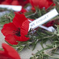 Stock image of ANZAC Day Remembrance Day Poppy